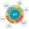 Grupo de Framework adf y oracle designer