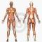 Grupo de Anatomia y fisiologia